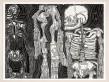 Nick Lowe, One Phantom, 2010, Encre sur papier, 50 x 65.3 cm.