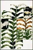 Gérard Titus-Carmel L'herbier du Seul V2, 2005 Encre de Chine, acrylique et papier journal sur vélin d'Arches marouflé sur carton 120 x 80 cm